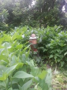 My Beehive