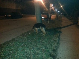 Dog sniffing by tree