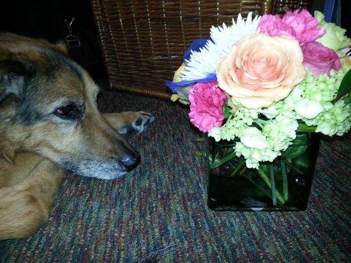 Tuki&Flowers.jpg