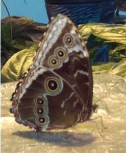 Butterfly_Field_Trip_Optimized20160518